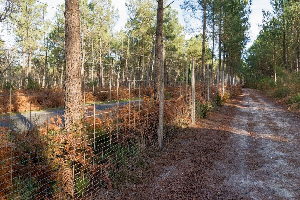 Parc de chasse en Charente Maritime For u00eat Investissement # Bois De Chasse A Vendre