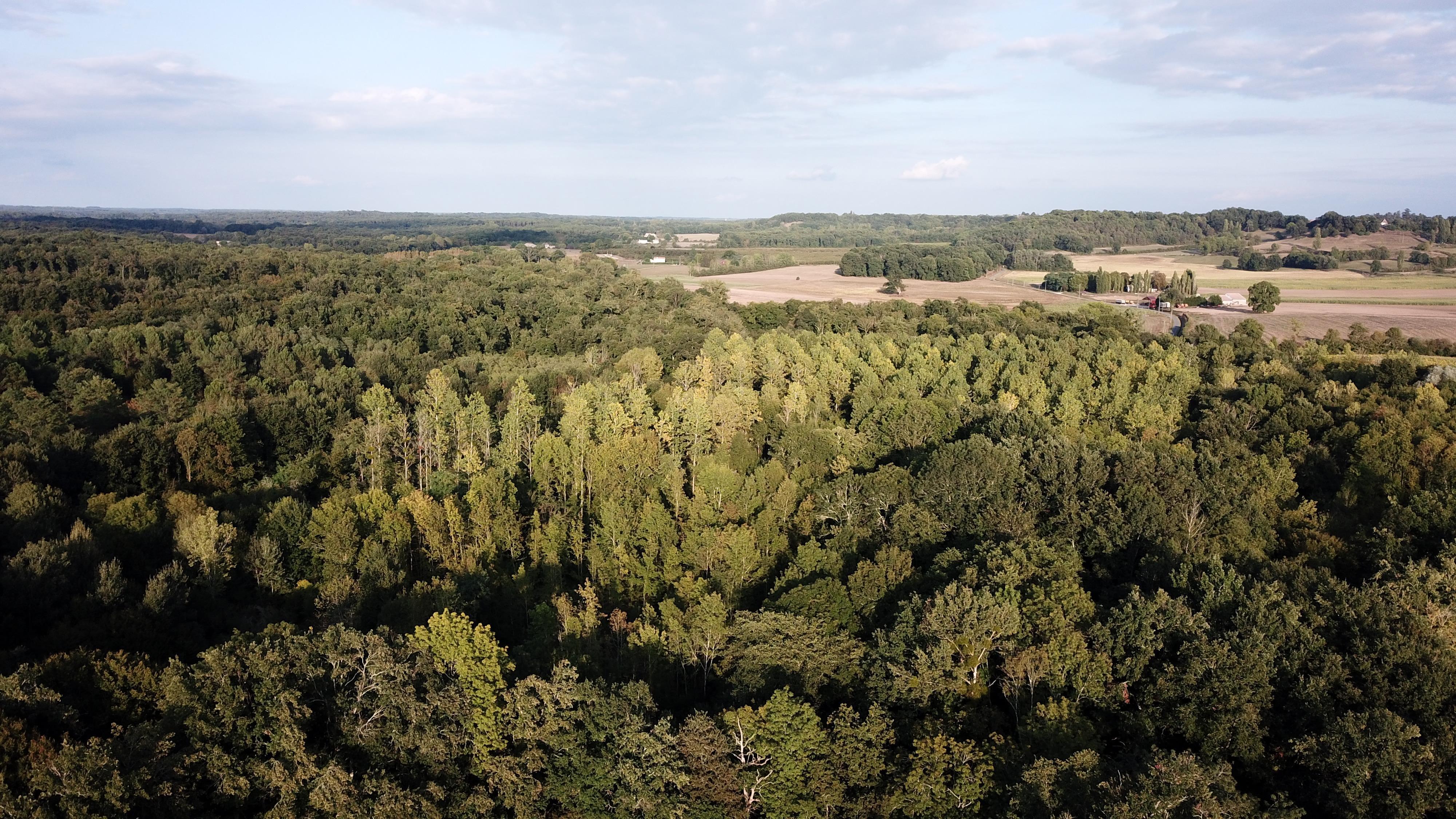 Domaine Forestier En Dordogne Limite Gironde Foret Investissement