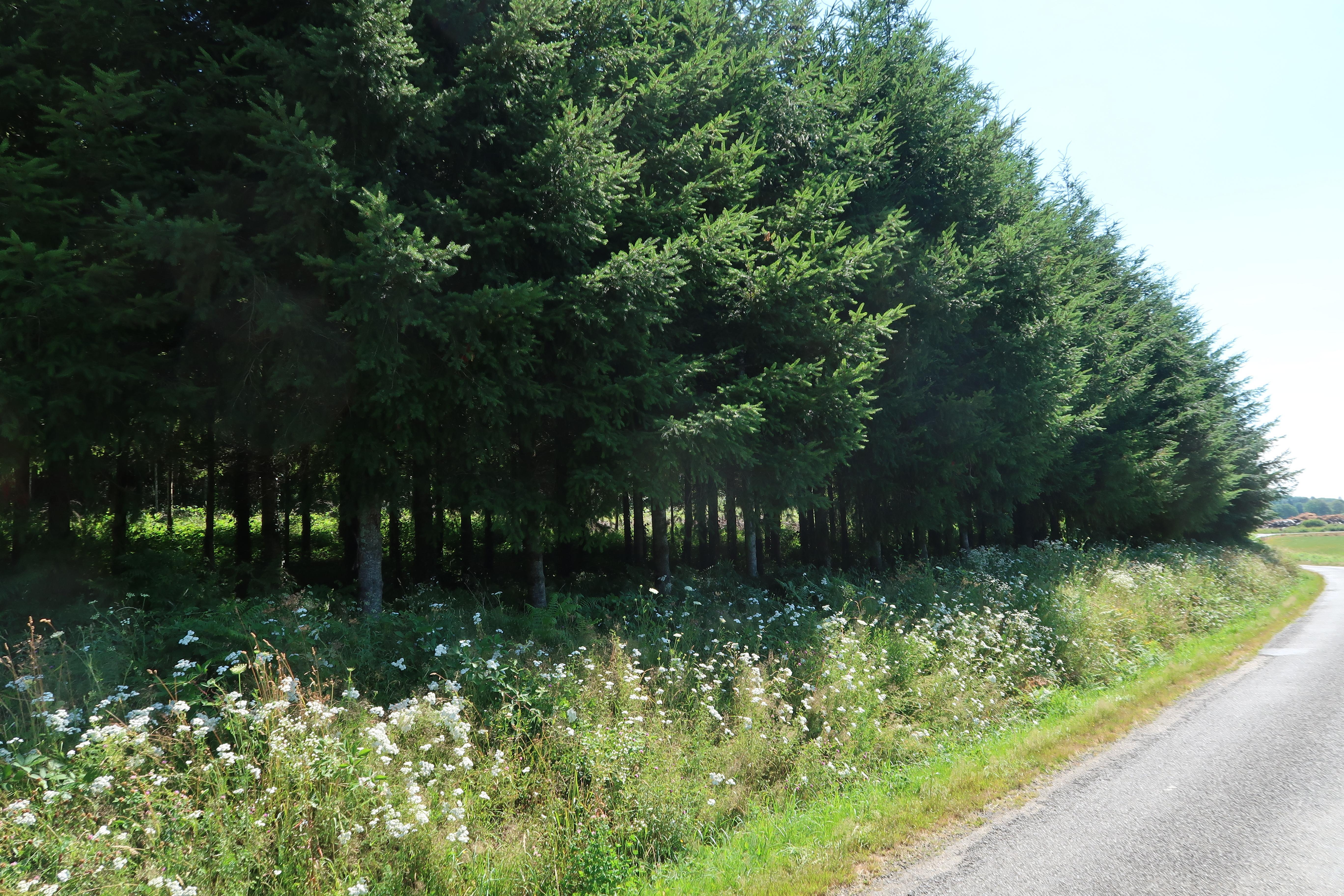 Plantation de Douglas et de Châtaignier dans le Limousin | Forêt ...