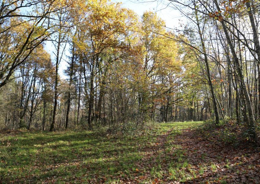 Forêt en Périgord Blanc