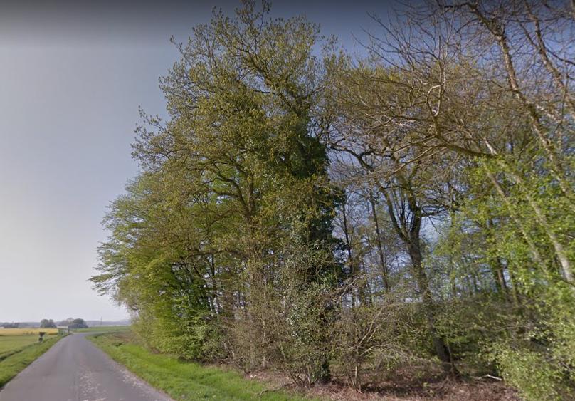 Forêt de Production et de loisirs en Bretagne