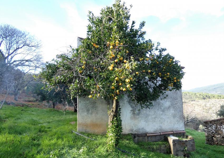 Forêt dans l'Alentejo au Portugal