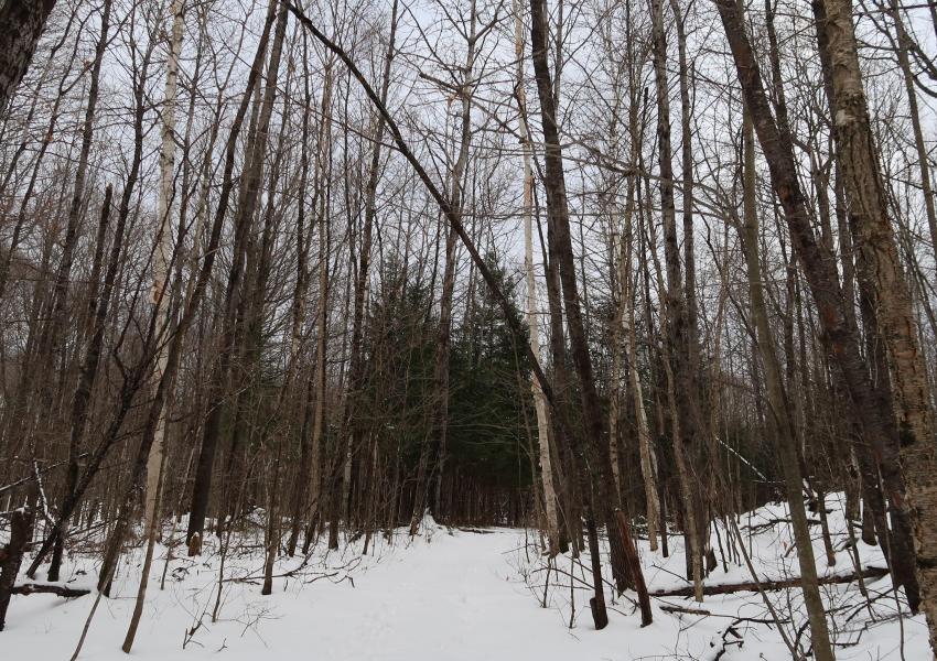 """Propriété forestière """"Chemin du lac"""" dans l'Est du Canada en province Ouest du Québec"""