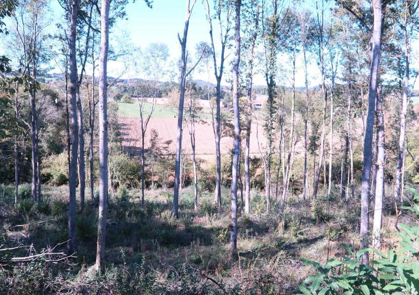 Forêt dans le Gers