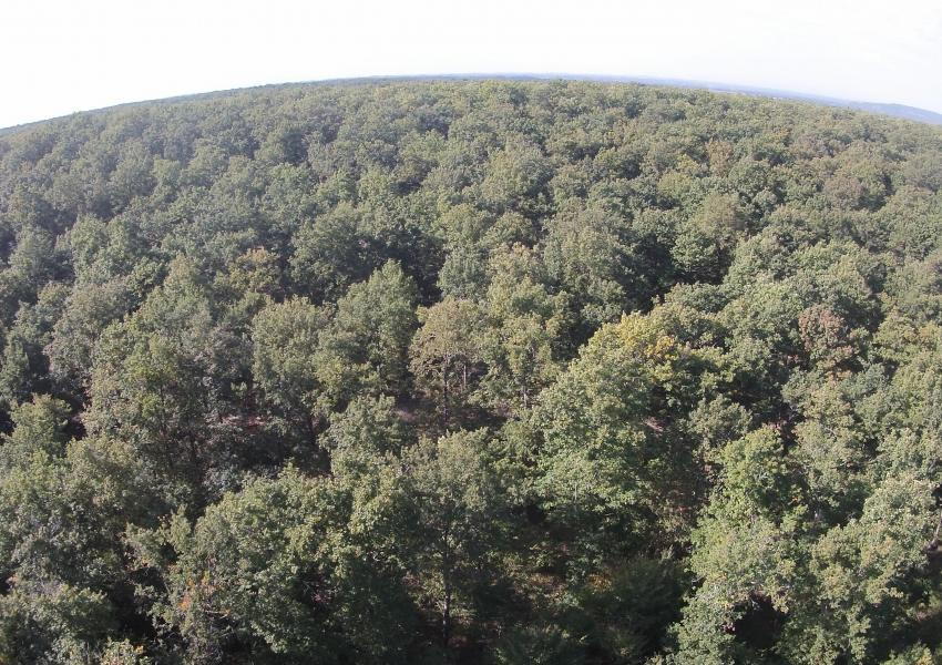 Domaine forestier dans le Tarn