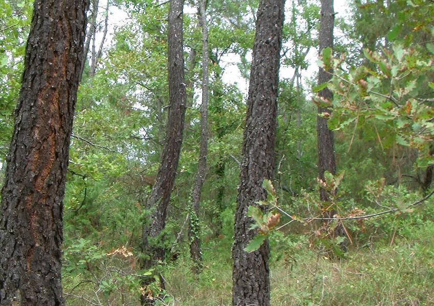 Propriedade florestal no Var