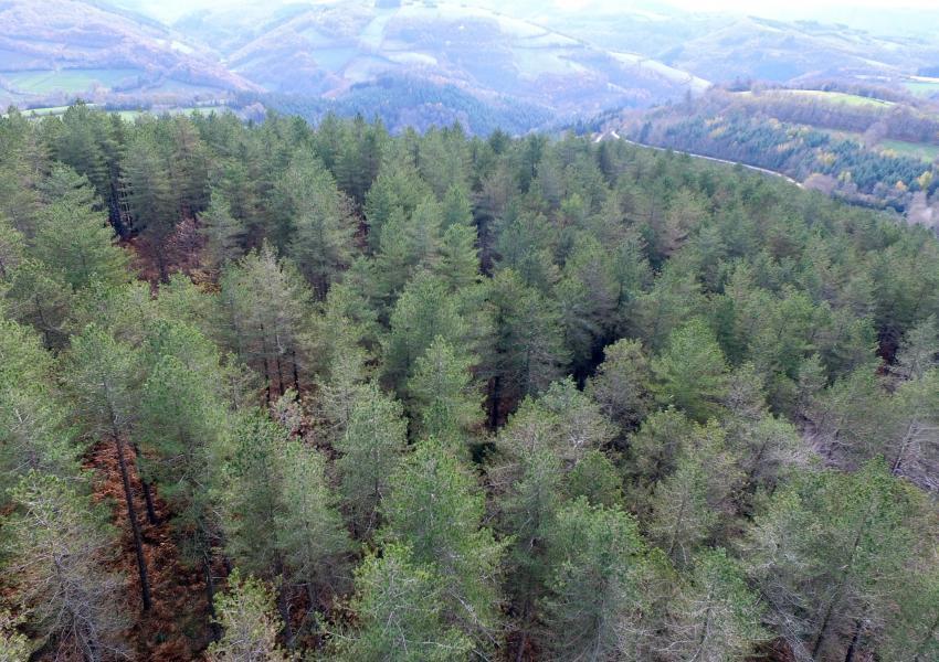 Forêt au coeur du Tarn avec bâti