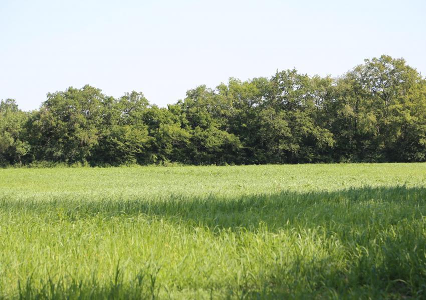 Propriété forestière d'agrément