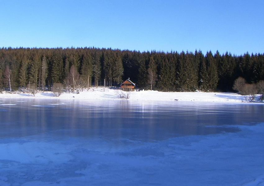Chalet and pond in the middle of the forest