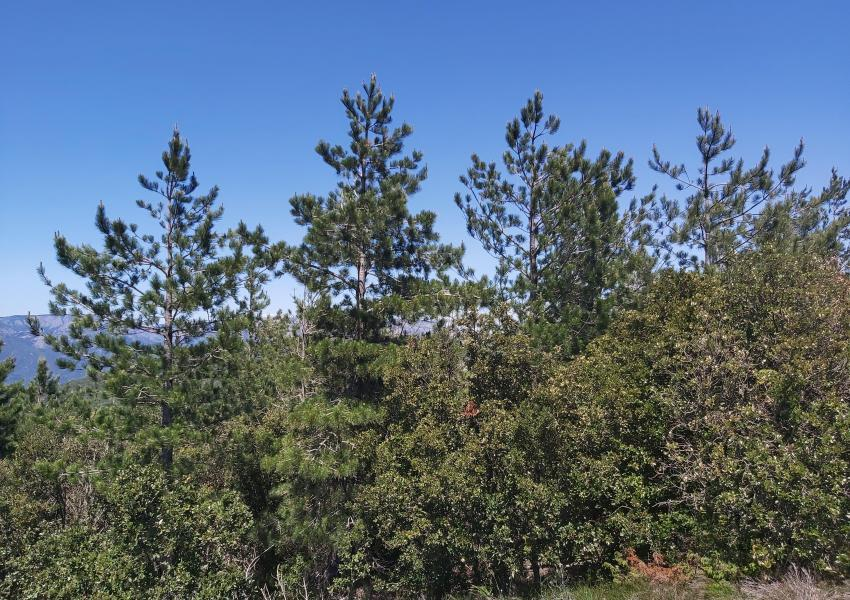 Cinq lots de parcelles forestières dans le département de l'Hérault