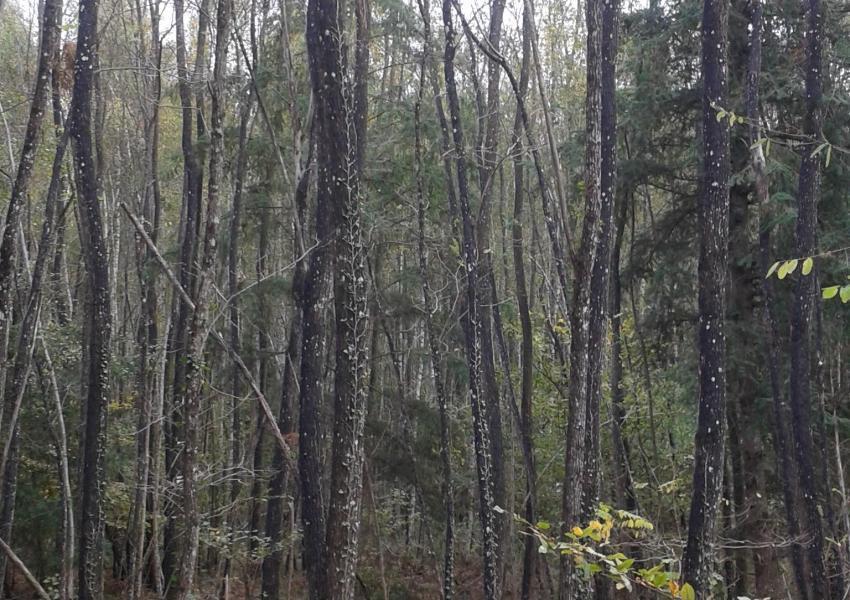 Forêt à vendre dans la Nièvre