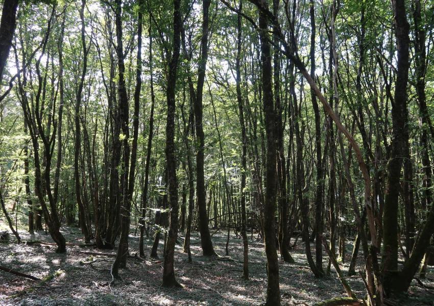 Forêt de production en Vienne