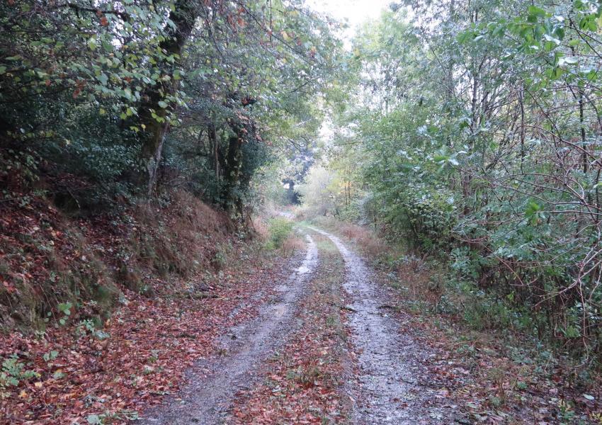 Forêt de production en Douglas dans l'Aveyron