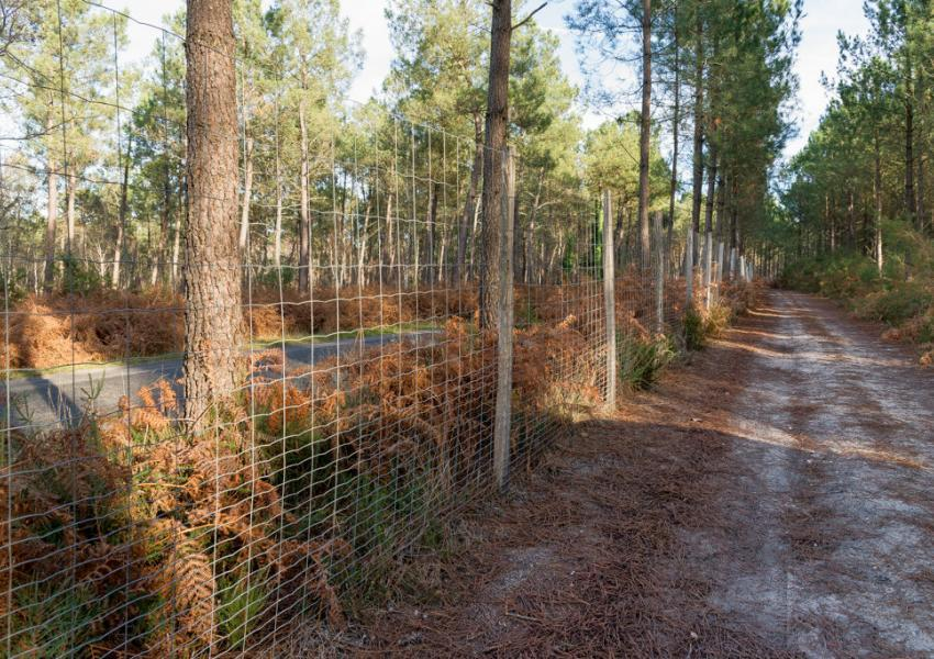 Parc de chasse en Charente-Maritime
