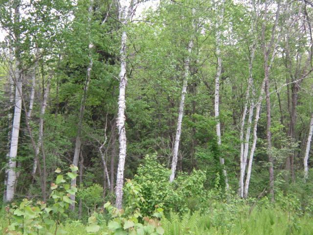 """Massif forestier au Nord de Montréal, dans l'Ouest Québecois """"Forêt du Mont Saint Michel"""" (lot 16)"""