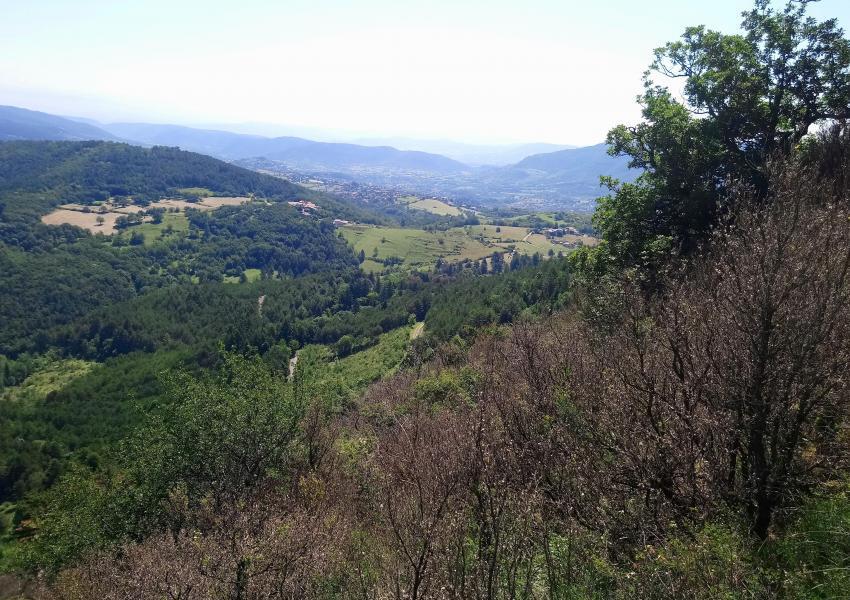 Forêt de 128 ha sur la commune de Privas