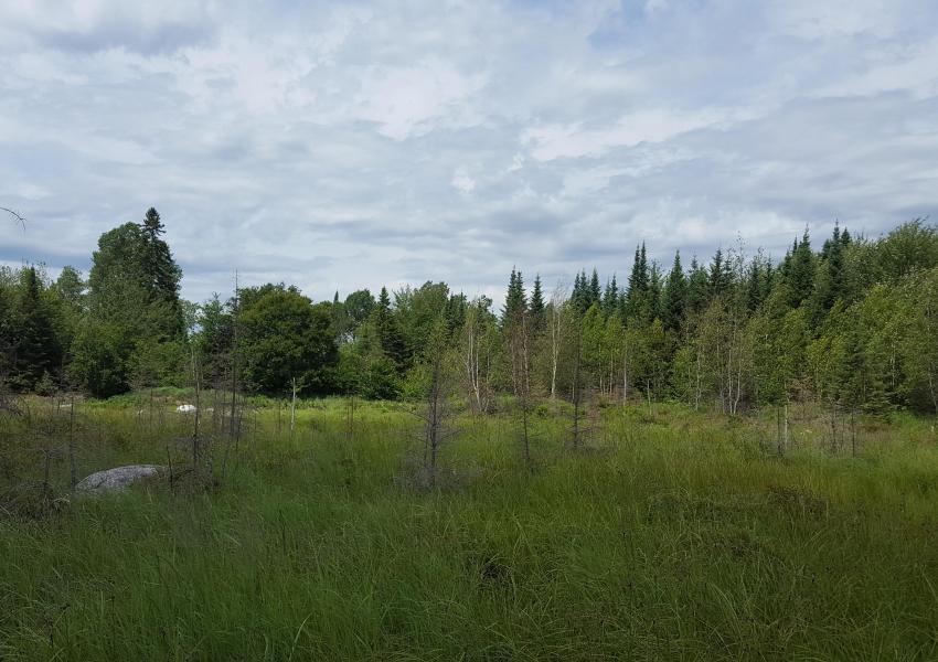 Domaine de lac et montagne Papineau
