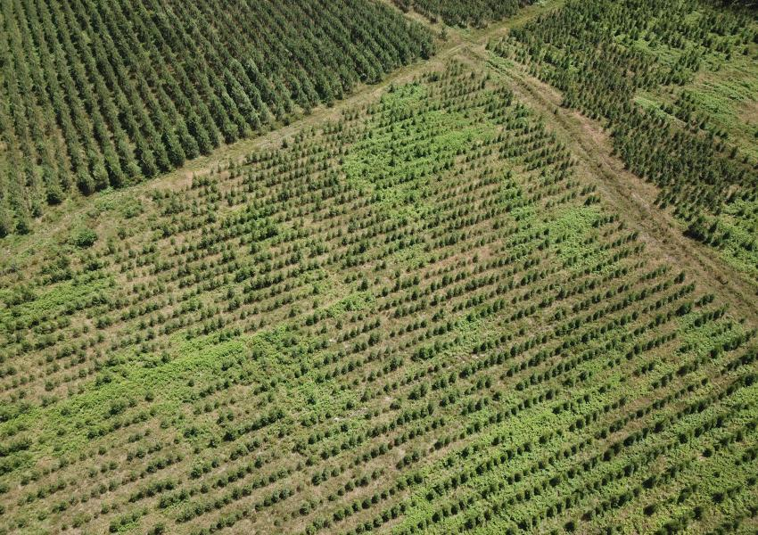 Forêt Landaise de production