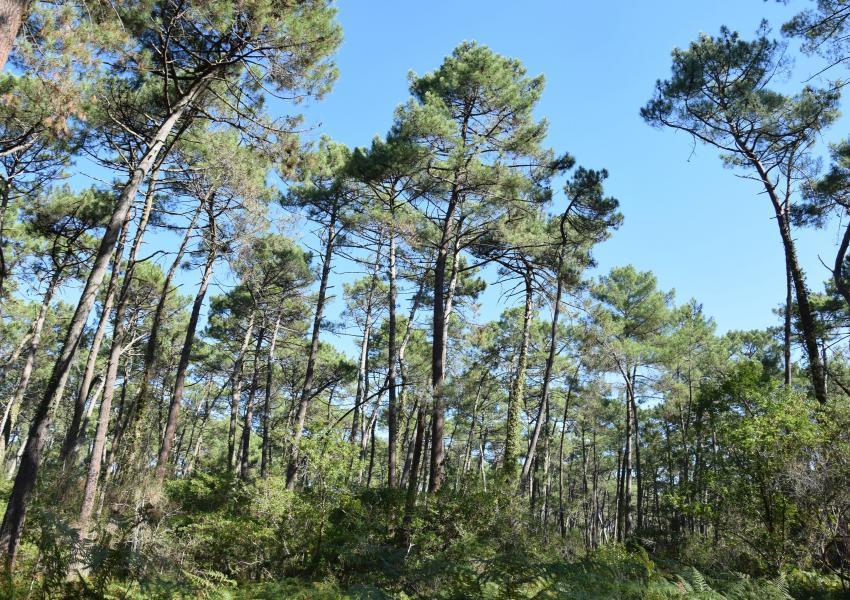 Forêt de 32 ha en bord d'océan