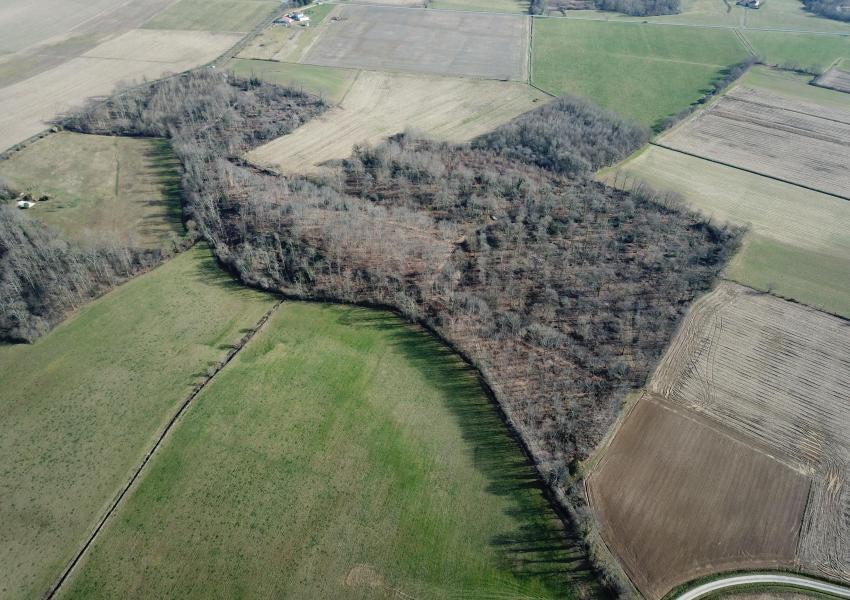 Forêt de production avec palombière
