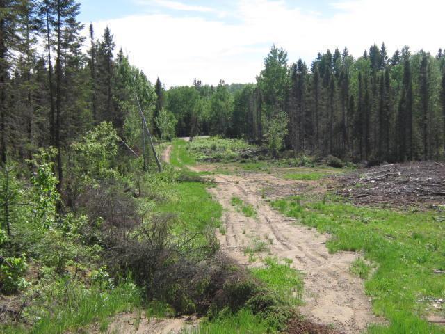 """Massif forestier au Nord de Montréal, dans la province Ouest de Québec, """"Forêt du Mont Saint Michel"""" (Lot 14)"""