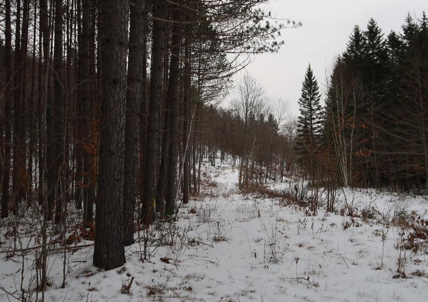 Forêt de la Petite Nation, à l'ouest de la province du Québec, à 1h30 d'Ottawa