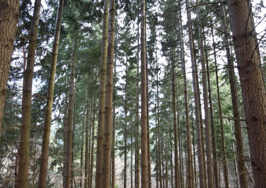 Forêt de Production en Haute-Loire