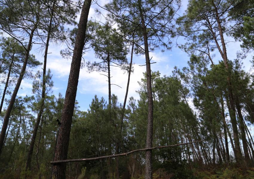 Parcelles boisées dans Les Landes
