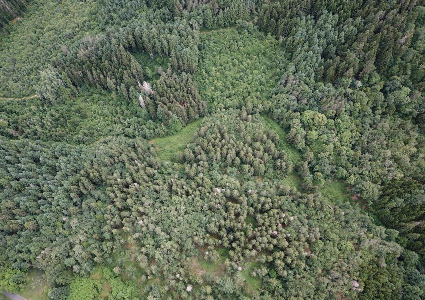 Forêt en Livradois Forez