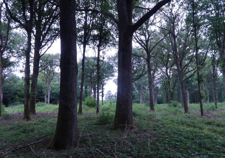 Forêt de beaux chênes en région Centre