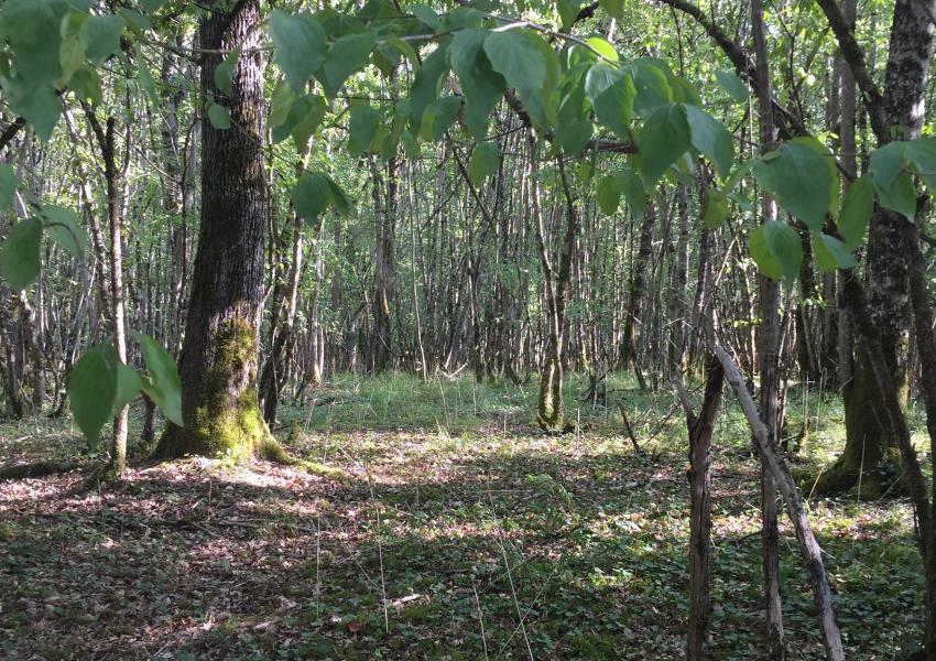 Propriété forestière à destination de Production et de Loisirs en Région Bourgogne-Franche-Comté