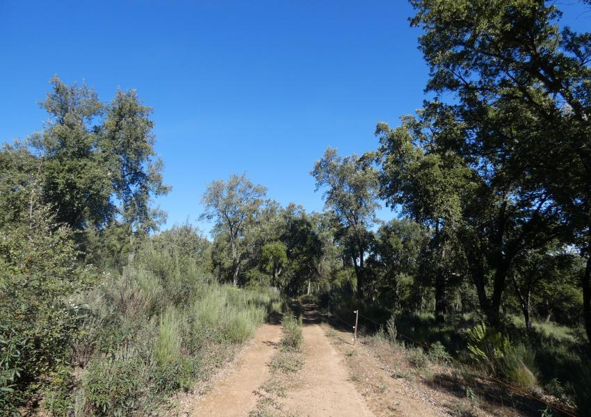 Propriété forestière dans la Région Beira Baixa au Portugal (Centre)