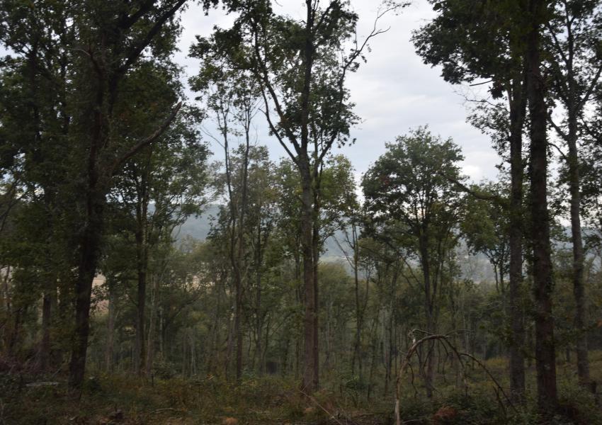 Forest estate in southwest France