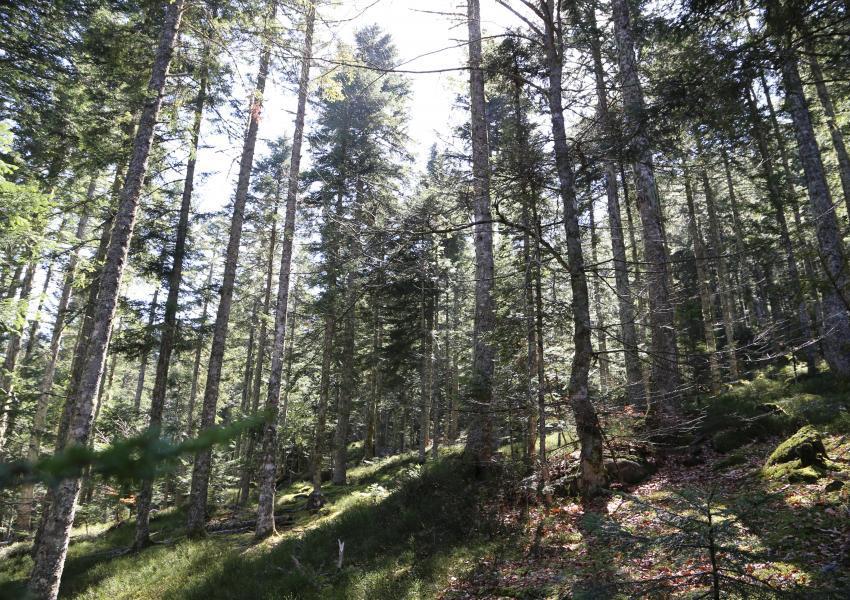 Forêt de Production en Auvergne-Rhône-Alpes