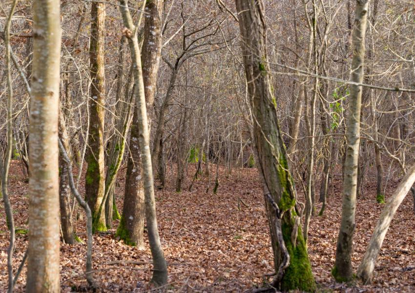 Parque de caza en Charente-Marítimo