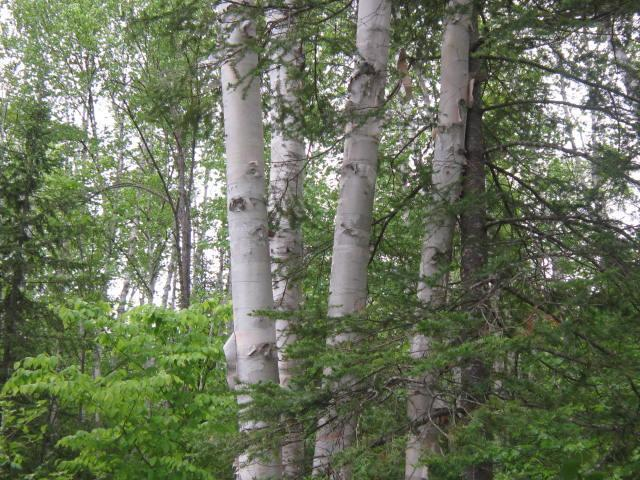 """Propriété forestière, """"Forêt du Mont Saint Michel"""", (lot 12) constructible et divisible à l'Ouest de la province du Québec"""