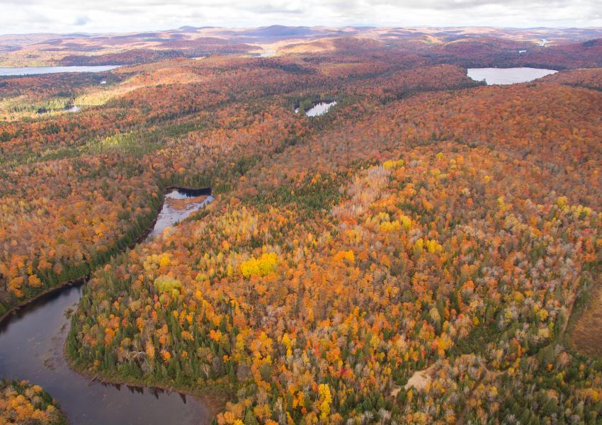 Built forest hunting estate in the Laurentians.