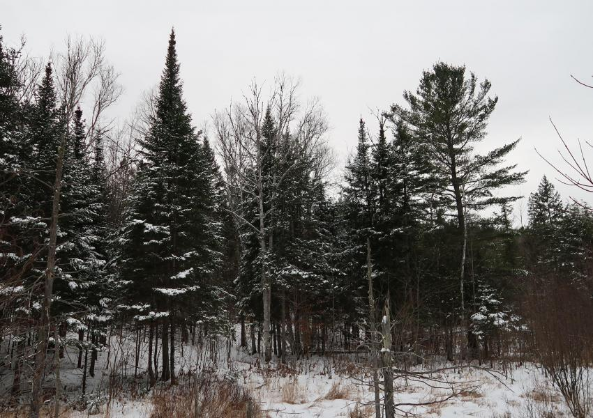 Divisible forest estate in the Papineau regional municipality; Forest Chemin Gagnon - Western Quebec