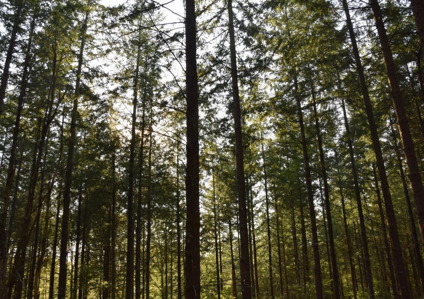 Propriété Forestière et Agricole dans le Cantal