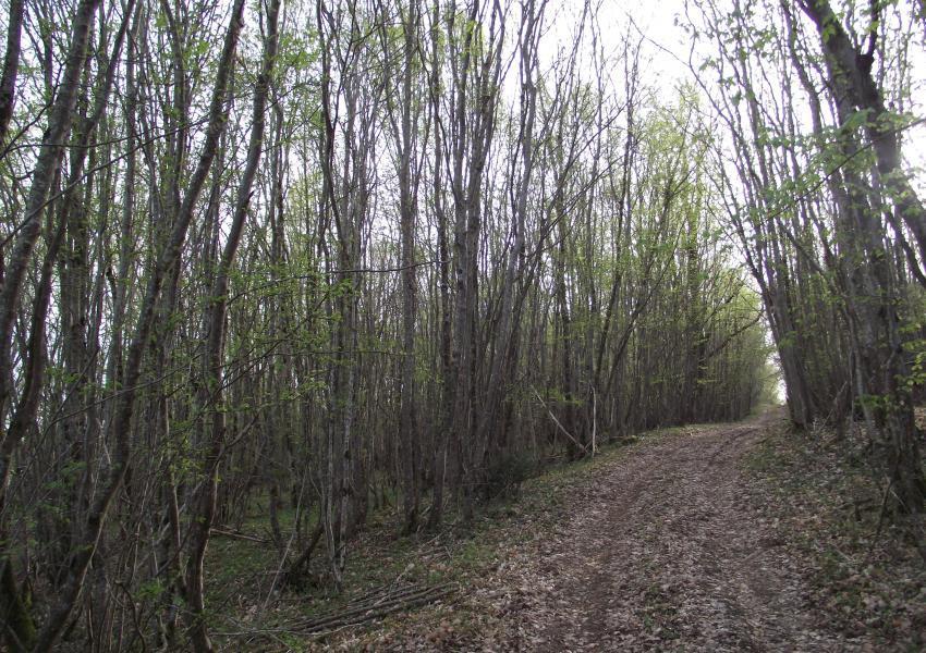 Propriété forestière à vocation cynégétique en région Centre