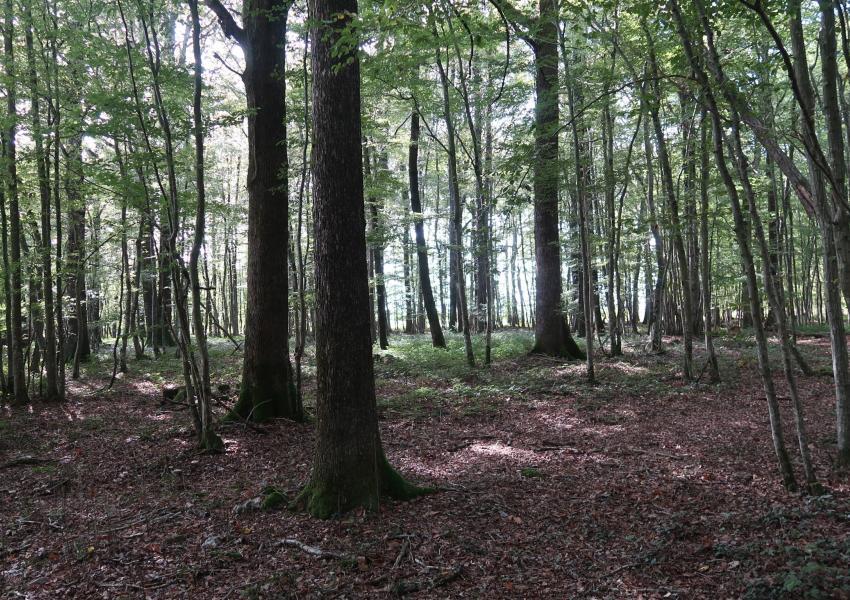 Rural property in Loir-et-Cher
