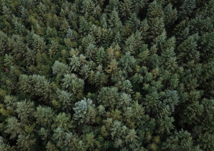 Forêt de Douglas au coeur du Massif Central