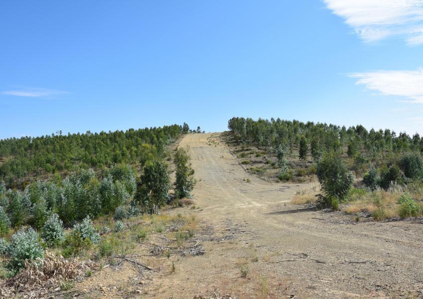 Massif forestier dans le Nord-Est du Portugal