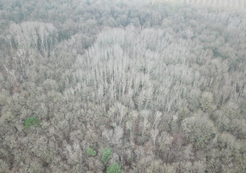 Chênes de production de 20 ha