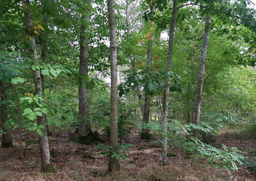 Parque de caça em Allier