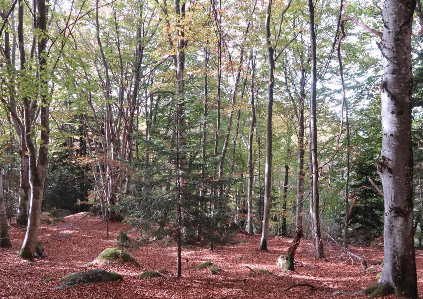 Forêt de production et de loisirs