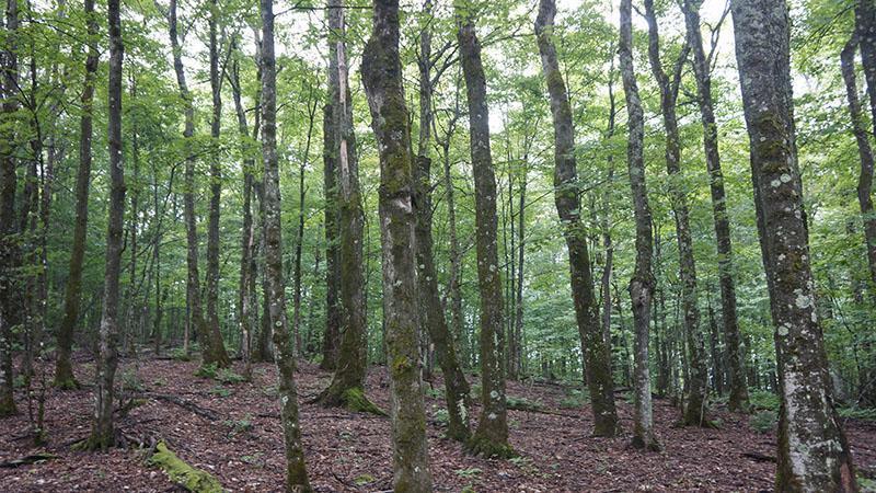Massif forestier en Outaouais, Ouest Québec : Érablière Naturelle