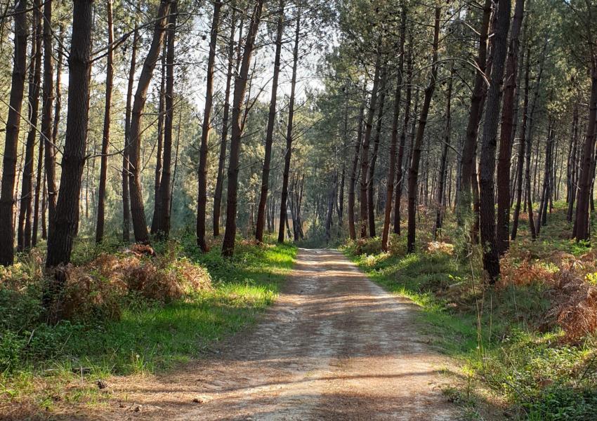 Propriété de production et de loisir en Gironde