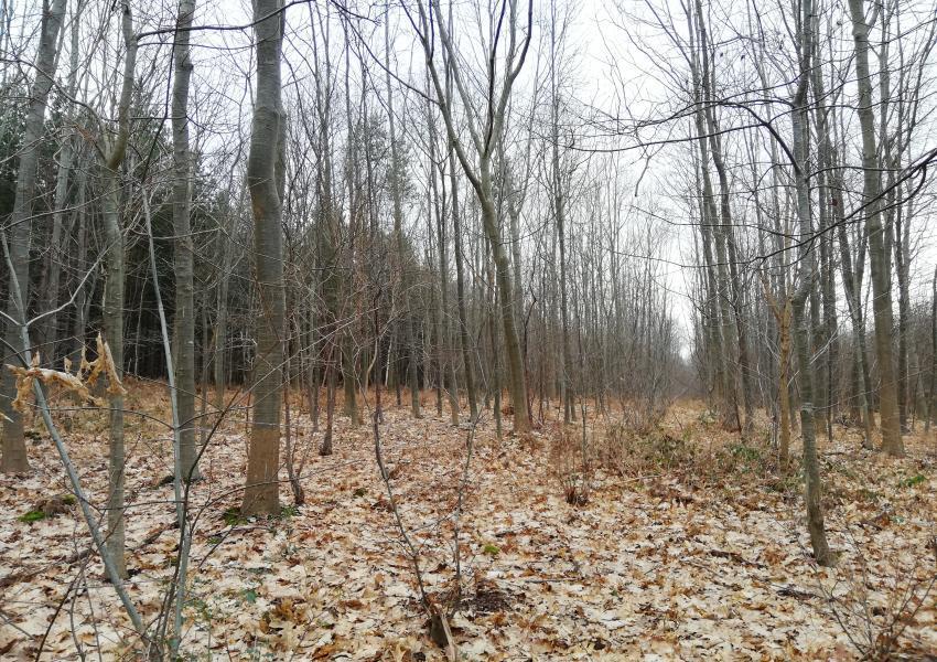 Forêt d'un seul tenant près d'Honfleur