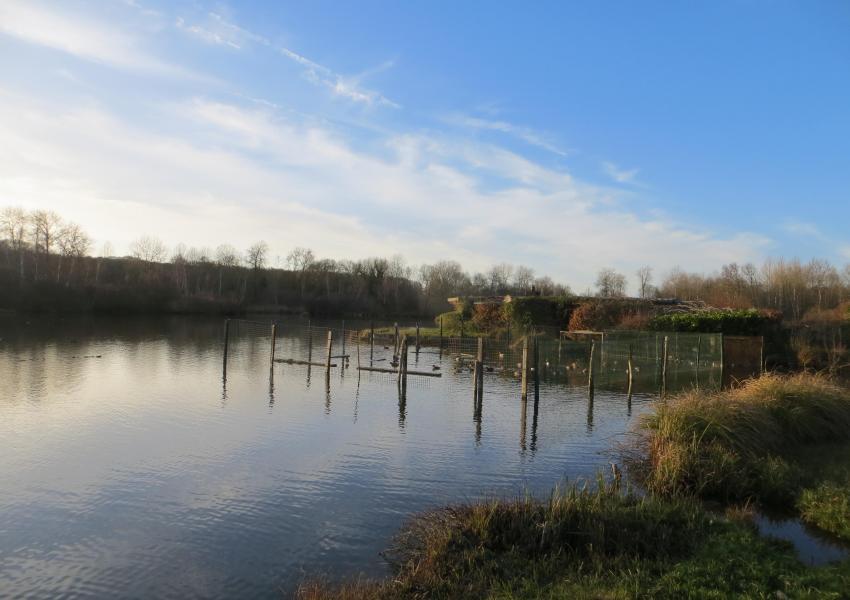 Hutte de chasse sur étang de 6 Hectares
